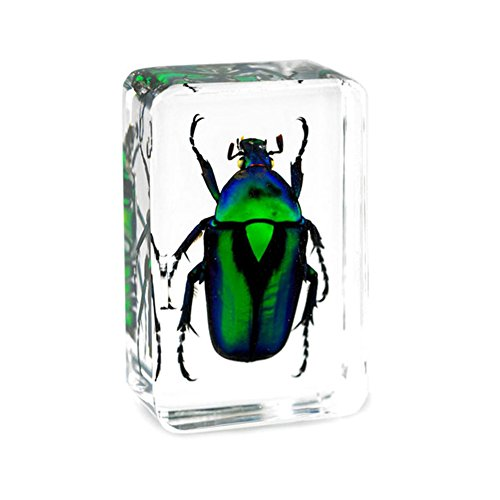 Top 8 Insects in Resin – Paperweights