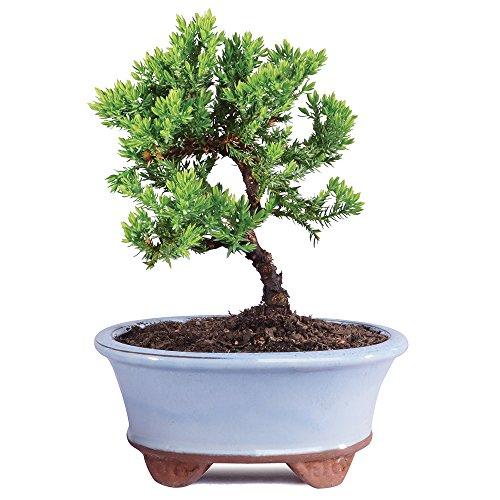 Top 10 Bonsai Tree Pot – Home & Kitchen Features
